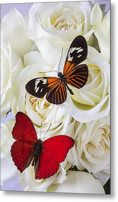 Two Butterflies On White Roses Metal Print by Garry Gay