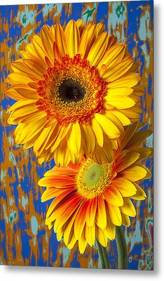 Two Golden Mums Metal Print by Garry Gay