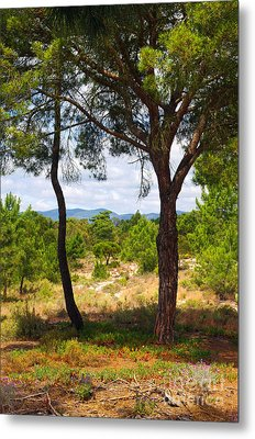 Two Pine Trees Metal Print by Carlos Caetano