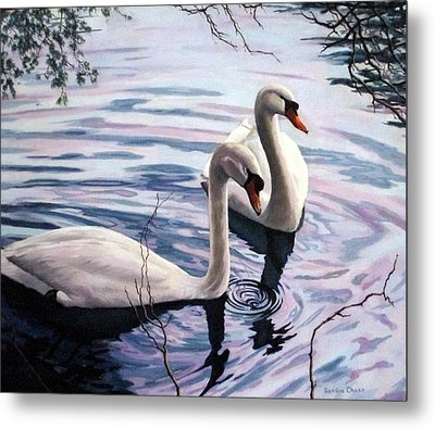 Two Swans A Swimming Metal Print by Sandra Chase