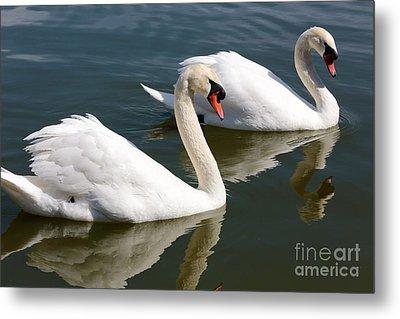 Two Swimming Swans Metal Print by Carol Groenen