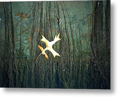 Under The Current Metal Print by Lisa Plymell