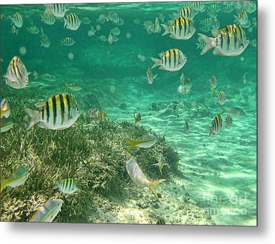 Under The Sea Metal Print by Peggy Hughes