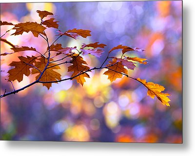 United Colours Of Autumn II Metal Print by Roeselien Raimond
