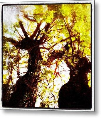 Untitled-twin Trees Metal Print by Juliann Sweet