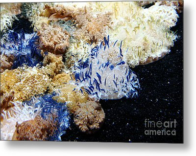 Upside Down Jelly Fish 5d24947 Metal Print by Wingsdomain Art and Photography