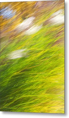 Urban Nature Fall Grass Abstract Metal Print by Christina Rollo