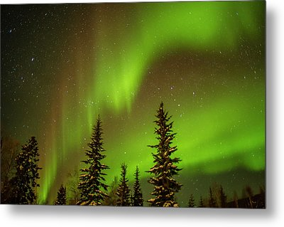Usa, Alaska Aurora Borealis Over Spruce Metal Print by Jaynes Gallery