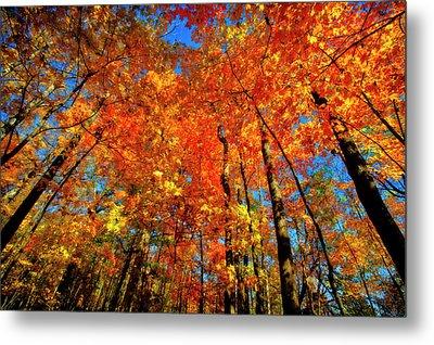 Usa, West Lafayette, Indiana, Trees Metal Print by Rona Schwarz