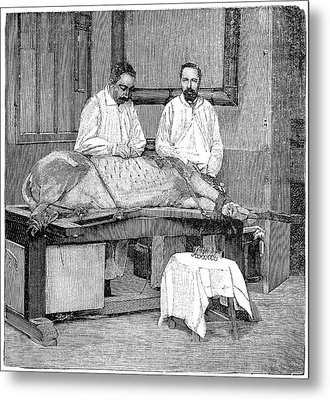 Vaccine Research, 1893 Metal Print by Science Photo Library