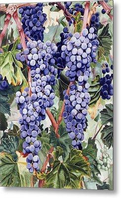 Valley Vines Metal Print by Gael Graysen