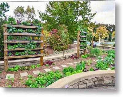 Vegetable Garden 4 Metal Print by Lanjee Chee