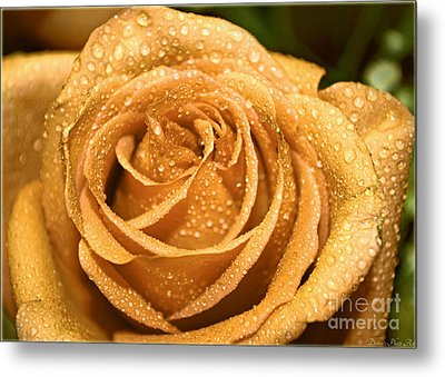 Very Wet Rose Metal Print by Debbie Portwood