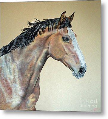 Veterinarian's Warm Blood Horse Metal Print by Ann Marie Chaffin