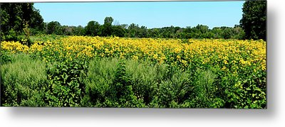 View Of A Field, Abshire Prairie Metal Print by Panoramic Images