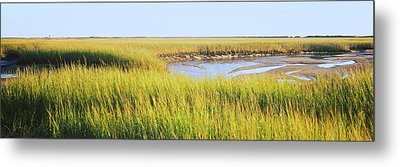 View Of Crop In The Field, Cape Cod Metal Print by Panoramic Images