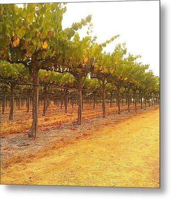 Vines Aligned Metal Print by CML Brown