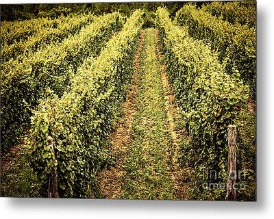 Vines Growing In Vineyard Metal Print by Elena Elisseeva