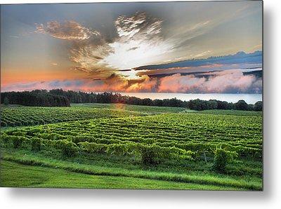 Vineyard At Sunrise Metal Print by Steven Ainsworth