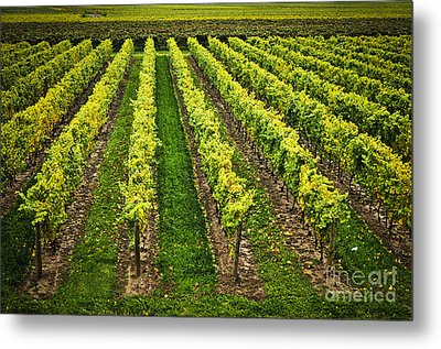 Vineyard Metal Print by Elena Elisseeva