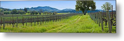 Vineyard In Sonoma Valley, California Metal Print by Panoramic Images
