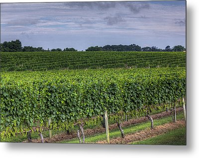 Vineyard Rows Metal Print by Steve Gravano