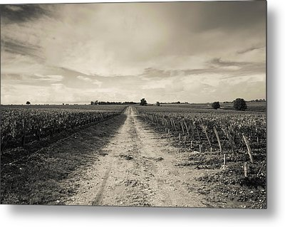 Vineyards In Autumn, Pauillac, Haut Metal Print by Panoramic Images