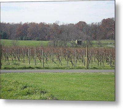 Vineyards In Va - 121234 Metal Print by DC Photographer