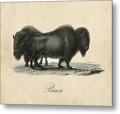 Vintage Bison Metal Print by Pati Photography
