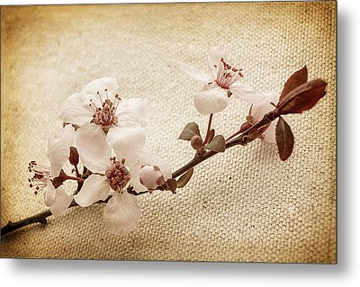 Vintage Blossoms Metal Print by Caitlyn  Grasso