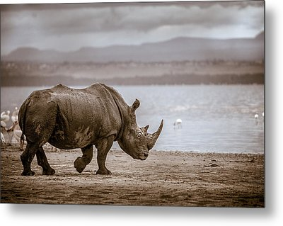 Vintage Rhino On The Shore Metal Print by Mike Gaudaur