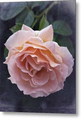 Vintage Rose No. 5 Metal Print by Richard Cummings