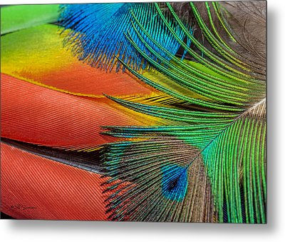 Vivid Colored Feathers Metal Print by Jeff Swanson