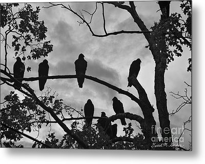 Vultures And Cloudy Sky Bw Metal Print by Dave Gordon