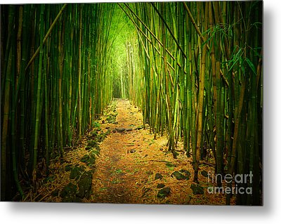 Waimoku Bamboo Forest Metal Print by Inge Johnsson