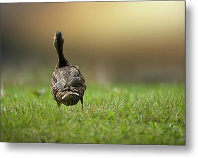 Wait For Me Metal Print by Brent L Ander