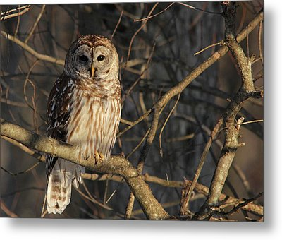 Waiting For Supper Metal Print by Lori Deiter