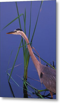 Waiting For The Catch Metal Print by Bucko Productions Photography