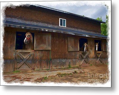 Waiting To Go Out In Field Metal Print by Dan Friend