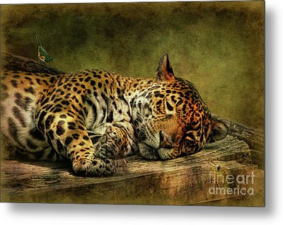 Wake Up Sleepyhead Metal Print by Lois Bryan