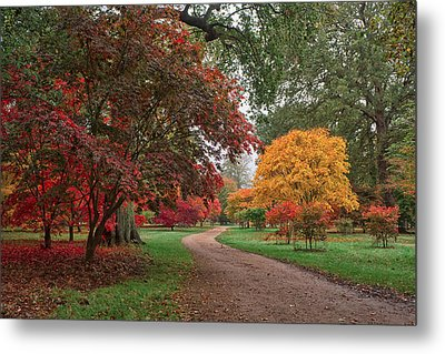 Walk Through The Colours.  Metal Print by Shirley Mitchell