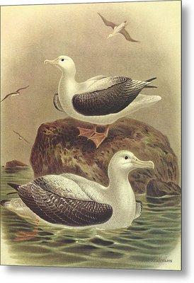 Wandering Albatross Metal Print by J G Keulemans