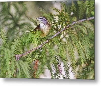 Warbler In The Cypress Metal Print by Deborah Benoit