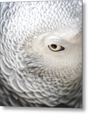 Watching You Watching Me Metal Print by Karen Wiles