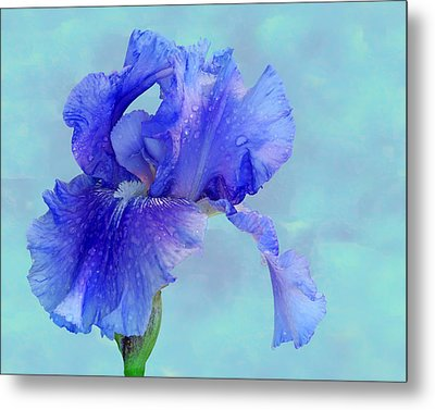 Water Iris Metal Print by Nikolyn McDonald