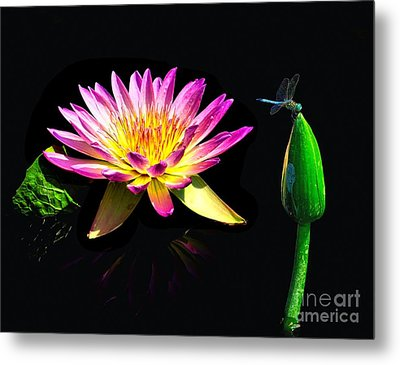 Water Lily Dragon Fly Metal Print by Nick Zelinsky