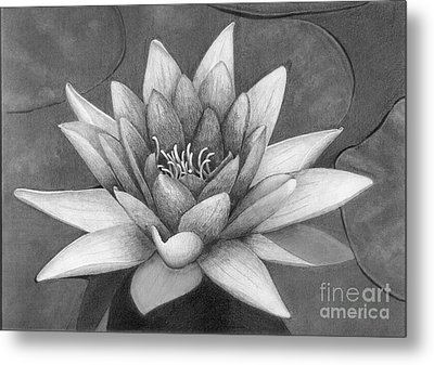 Waterlily Metal Print by Nicola Butt