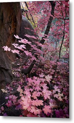 West Fork Fall Colors Metal Print by Dave Dilli