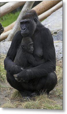 Western Lowland Gorilla Mother And Baby Metal Print by San Diego Zoo