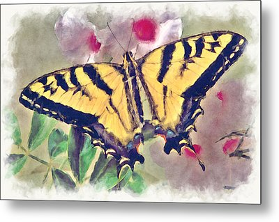 Western Tiger Swallowtail Papilio On Flower Metal Print by Robert Jensen